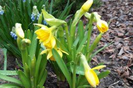 wiosna czas na nowy początek